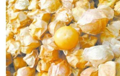黄菇娘图片 黄菇娘的吃法技巧