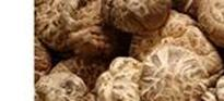 香菇药用功能 抗肿瘤、增强免疫力、降血脂、抗血栓