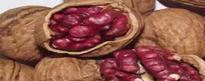 红皮核桃是转基因的吗