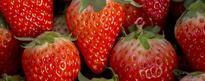 草莓坏了一点还能吃吗