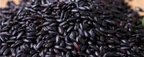 黑米是转基因食品吗