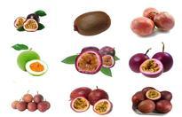 百香果种植的注意事项