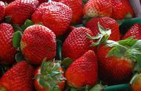 草莓什么时候成熟?