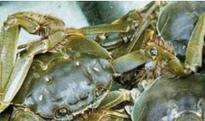 大闸蟹怎么保存 大闸蟹保鲜的方法技巧