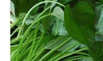 紫薯叶的功效与作用 紫薯叶能减肥吗