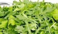 芝麻菜过敏是什么原因 芝麻菜过敏怎么办