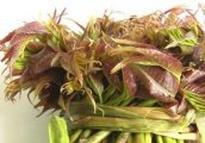 香椿的营养价值 香椿的功效哪些